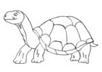 Große alte Schildkröte