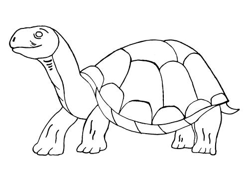 Große Alte Schildkröte Nadines Ausmalbilder