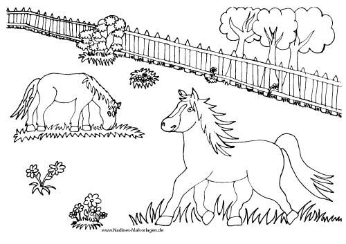 Ausmalbild Pferde auf Koppel