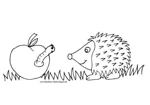 Ausmalbild Igel mit Wurm im Apfel
