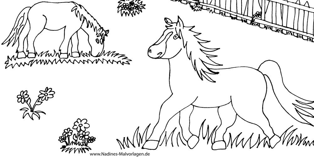 Pferde auf Koppel   Nadines Ausmalbilder