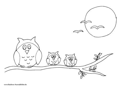 Ausmalbild Eulen auf Ast mit Mond und Vögeln