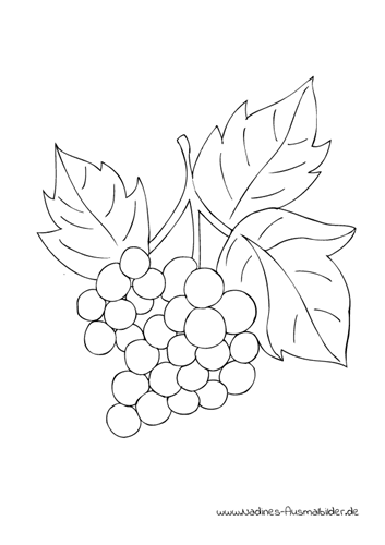 Ausmalbild Weintrauben Weinrebe Trauben Obst