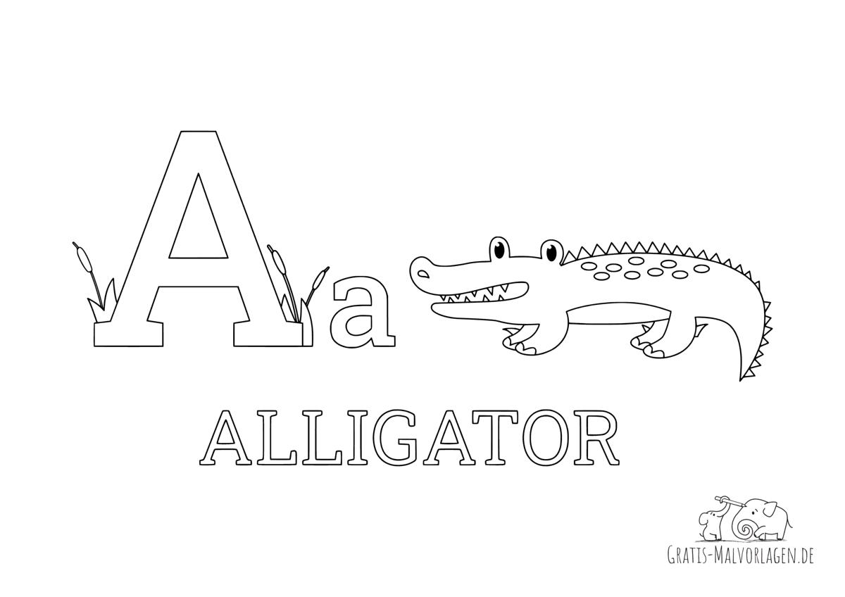 Ausmalbild Buchstabe A steht für Alligator (Englisch)