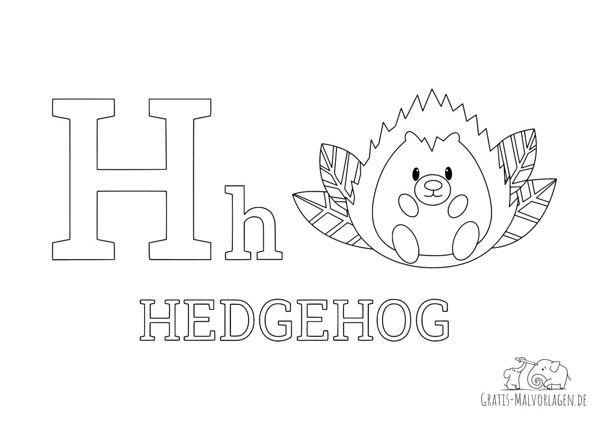 Ausmalbild Buchstabe H steht für Hedgehog (Englisch)