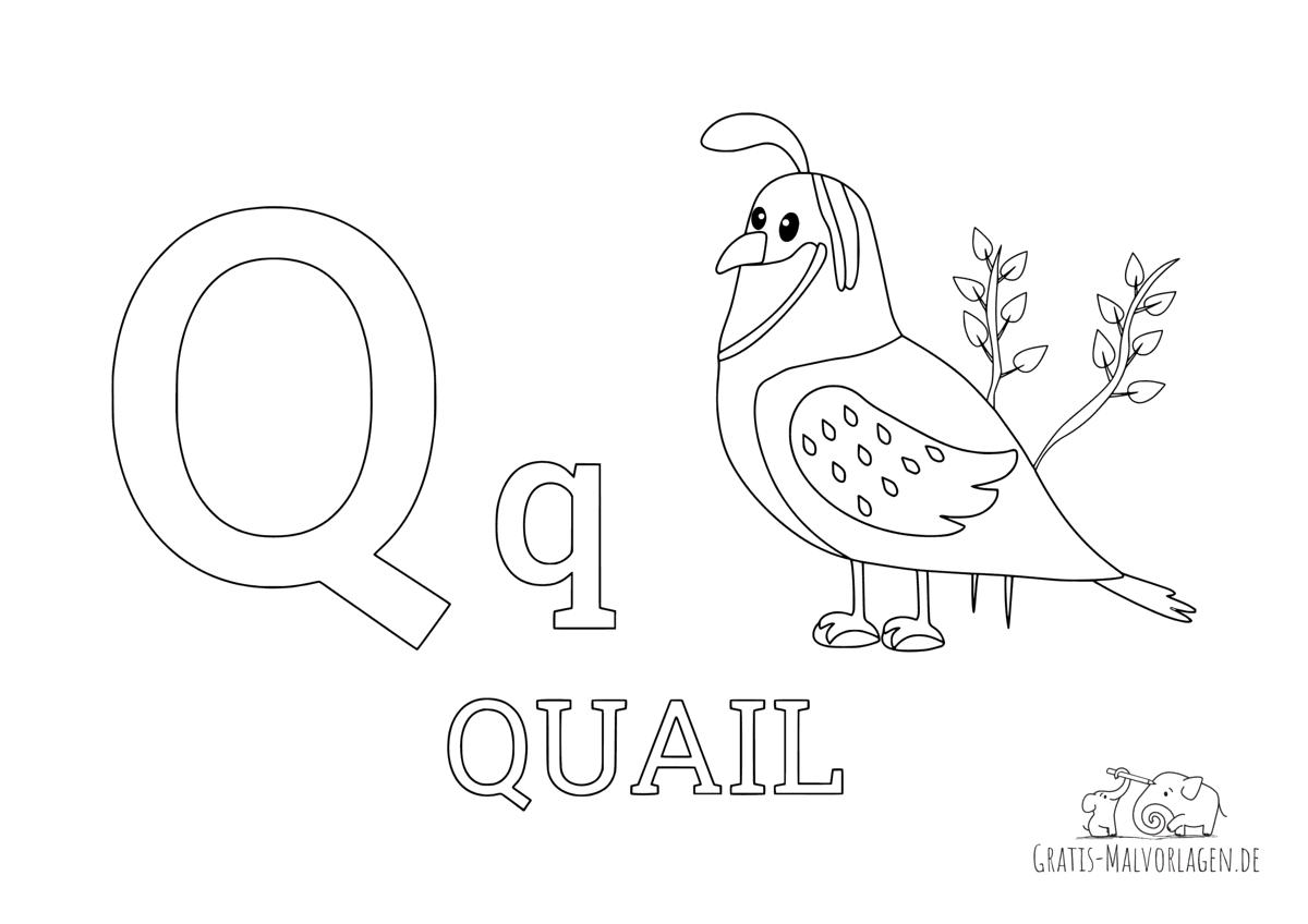 Ausmalbild Buchstabe Q steht für Quail (Englisch)