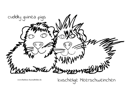 Ausmalbild cuddly guinea pigs – kuschelige Meerschweinchen