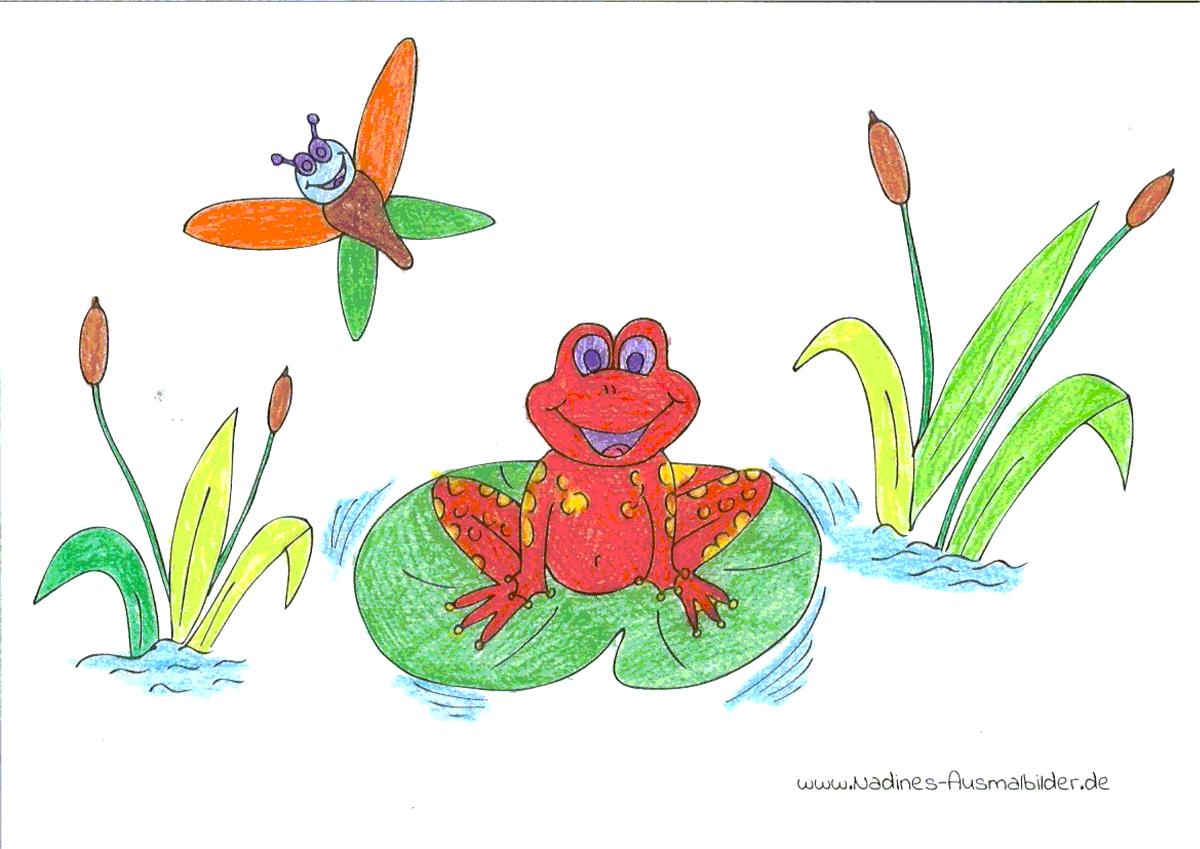 Ausmalbild Frosch - Niko 7 Jahre