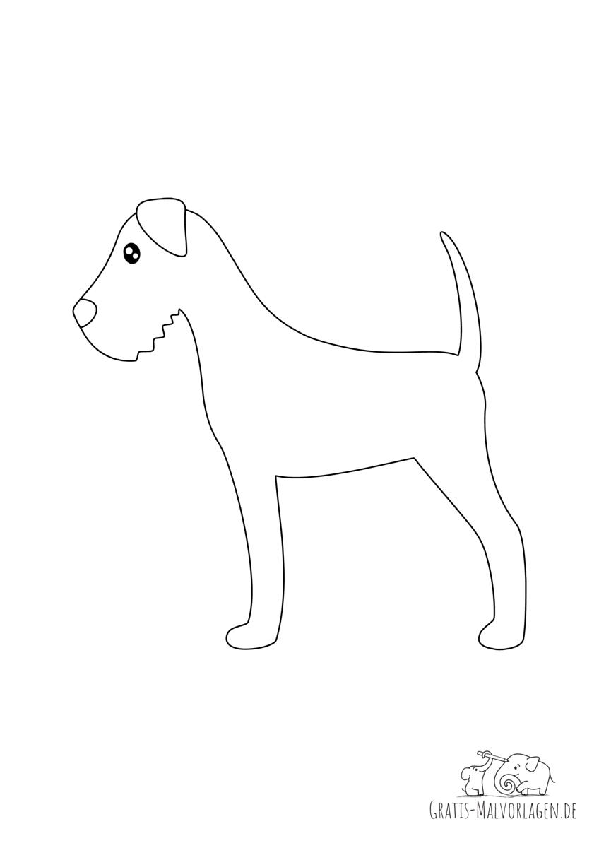 Irish Terrier Hund