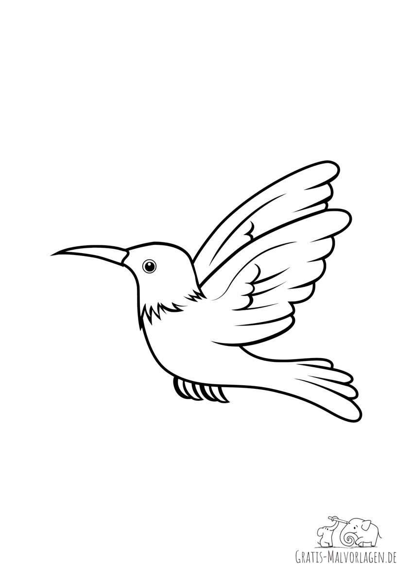 Ausmalbild Kolibri