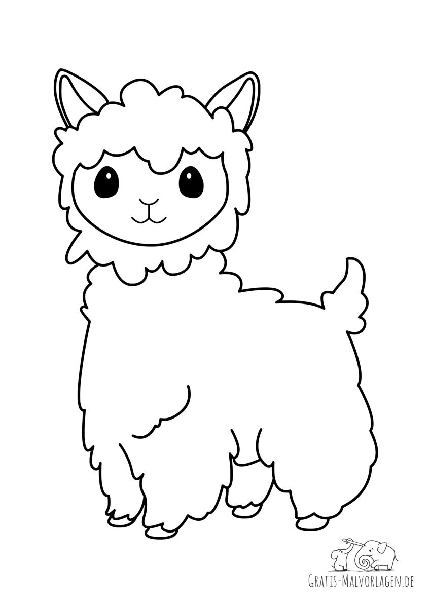 Lama mit viel Wolle