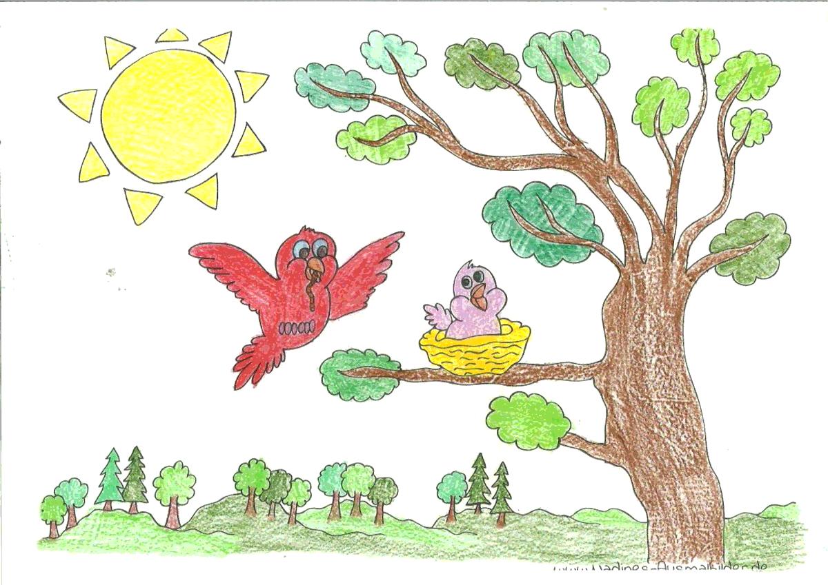 Ausmalbild Vogelfamilie - Kati 7 Jahre